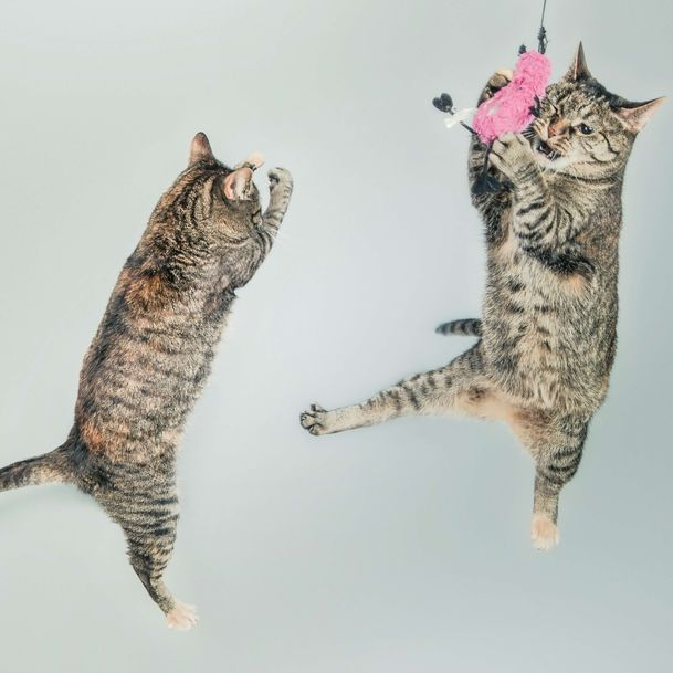 Two cats in the air playing with a pink toy, representing the pet toys category for Unioncrate's CPG Year In Review