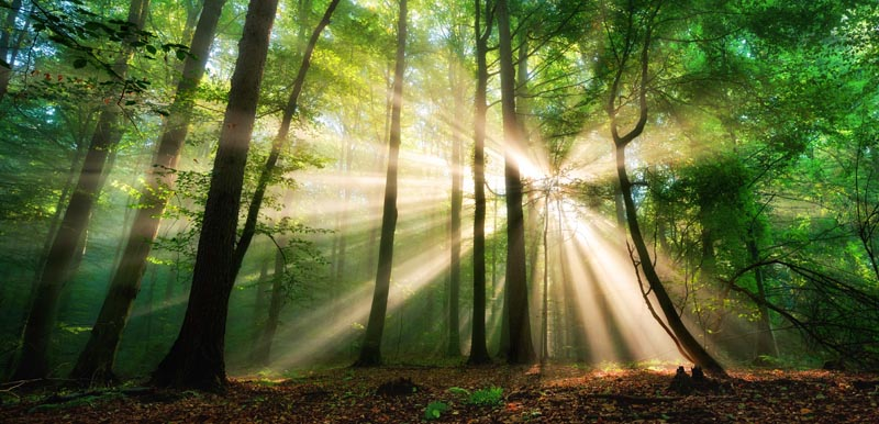 light shining through trees representing illumination and problem solving by lunavi