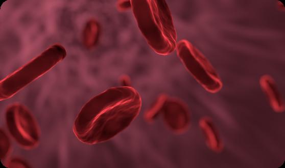Illustration of blood cells