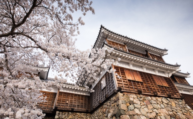 Ancient Japanese temple with cherry blossoms