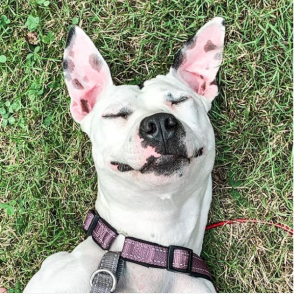 Happy dog on the grass