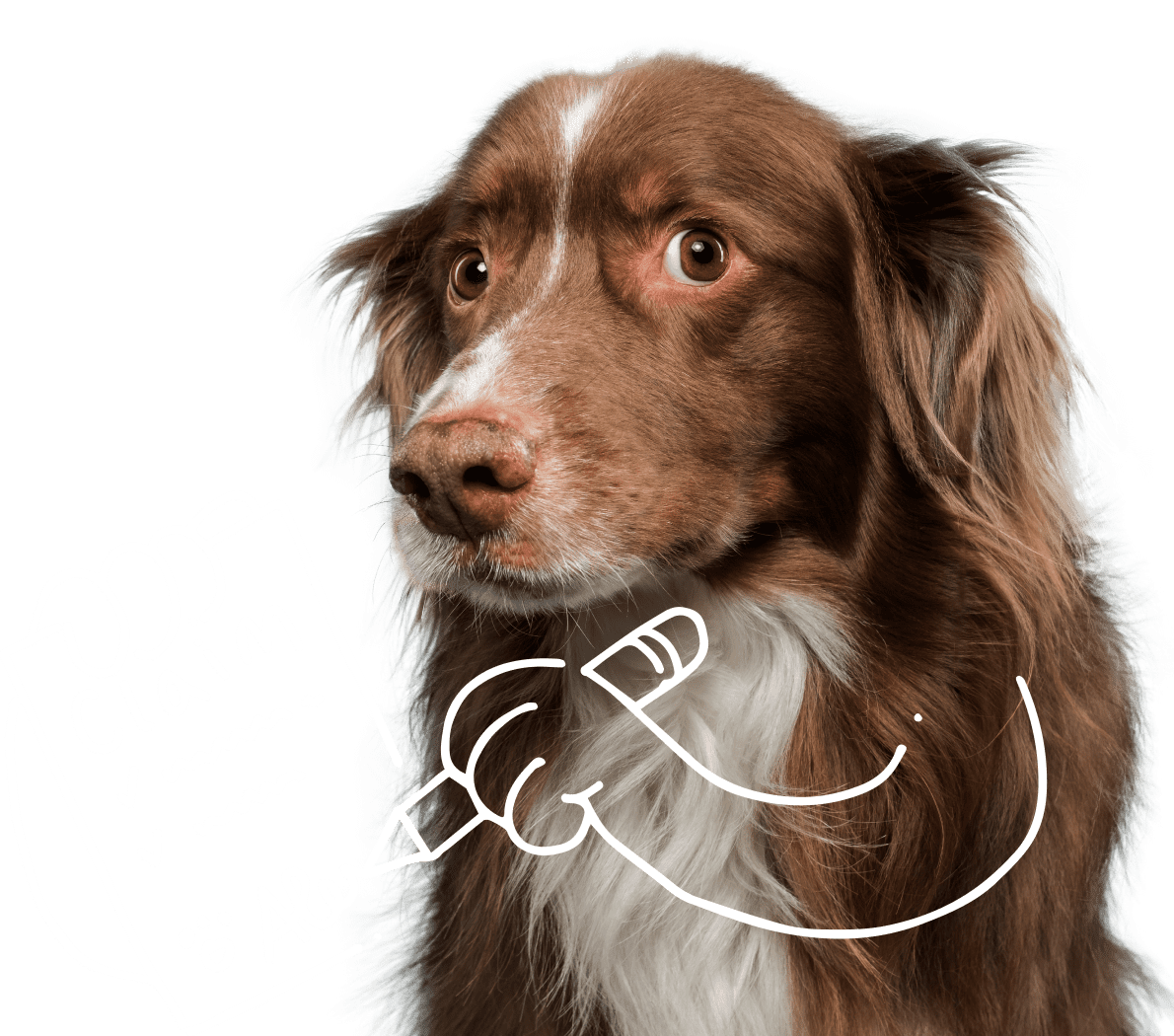 Brown dog writing a pet insurance claim