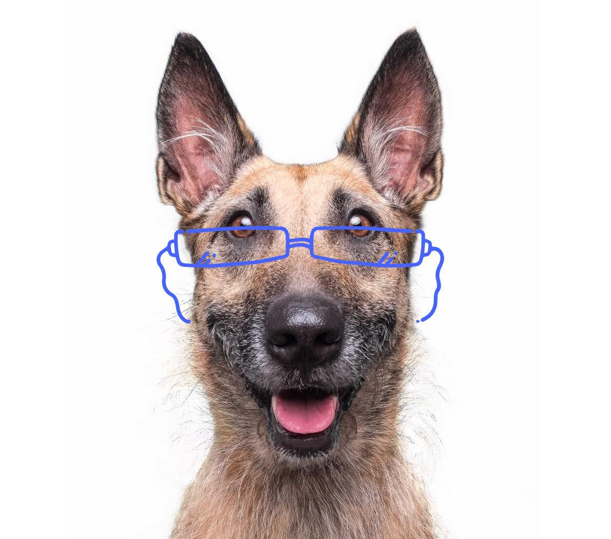 Happy elderly dog with glasses