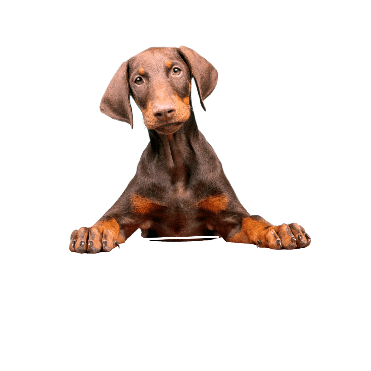 Dog with a graph drawing