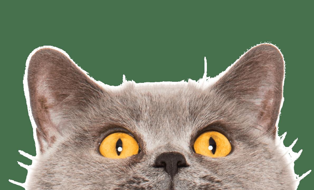 Cat peeking over the top of the screen