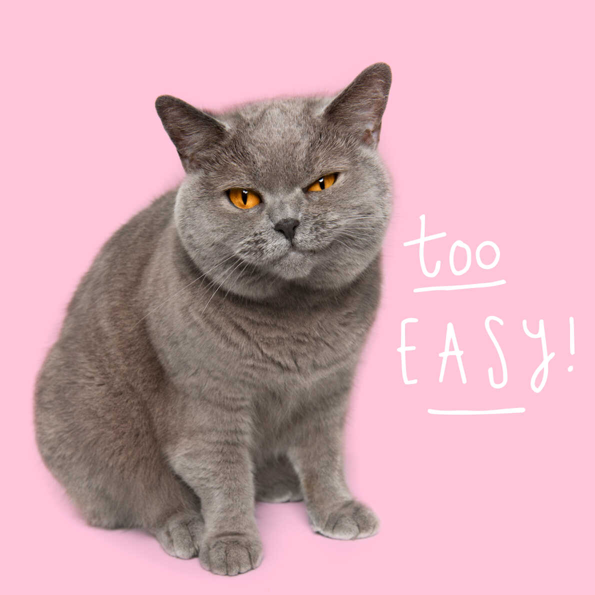 "Cat with a content expression saying ""too easy"""