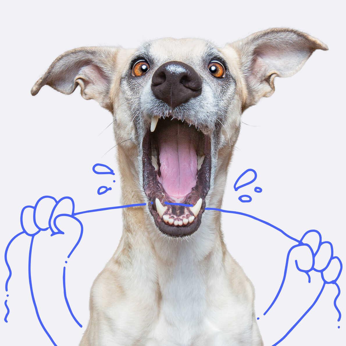 Dog flossing teeth