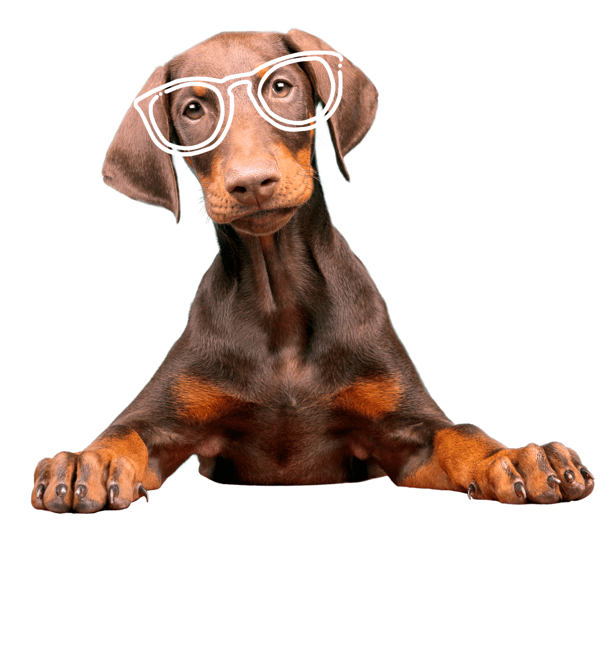 Dog with glasses and a book