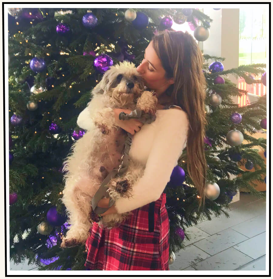 George the schnoodle being held and kissed by his owner while standing in front of a Christmas tree