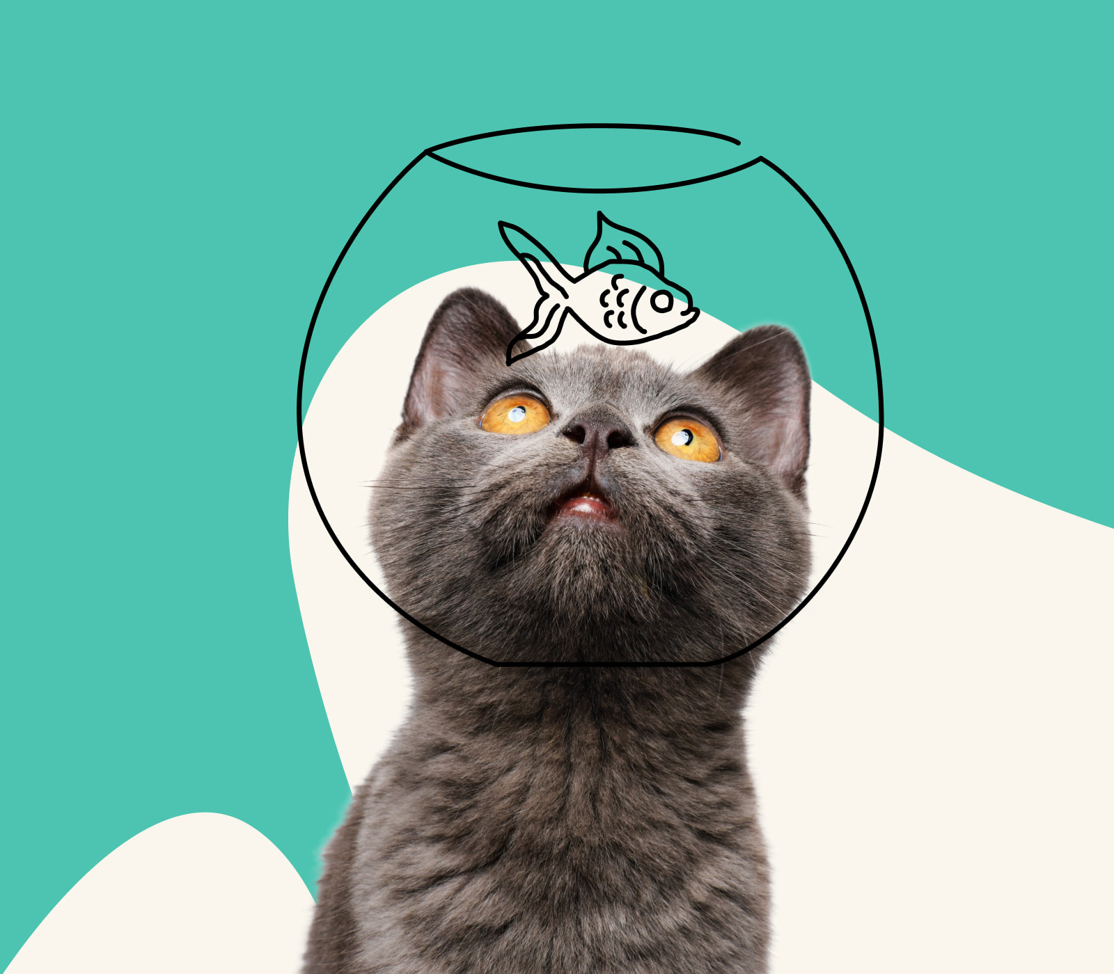 A cat with their head in a fishbowl