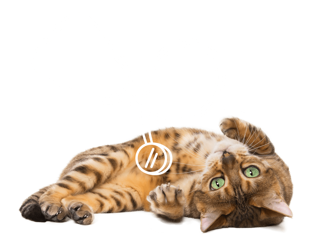 Upside down kitten playing with a stethoscope