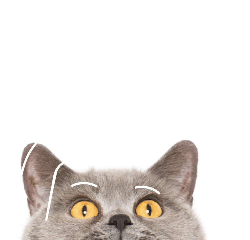 cat peeking head up and swatting at a bell