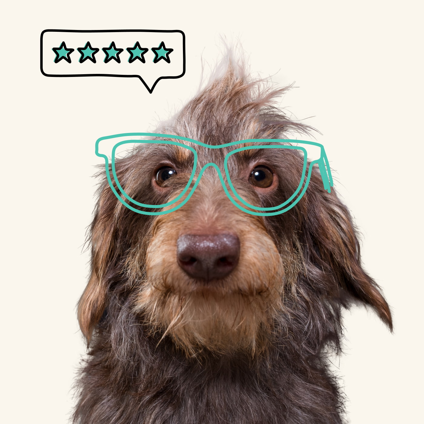A small fluffy dog with nerdy glasses gives a 5 star review
