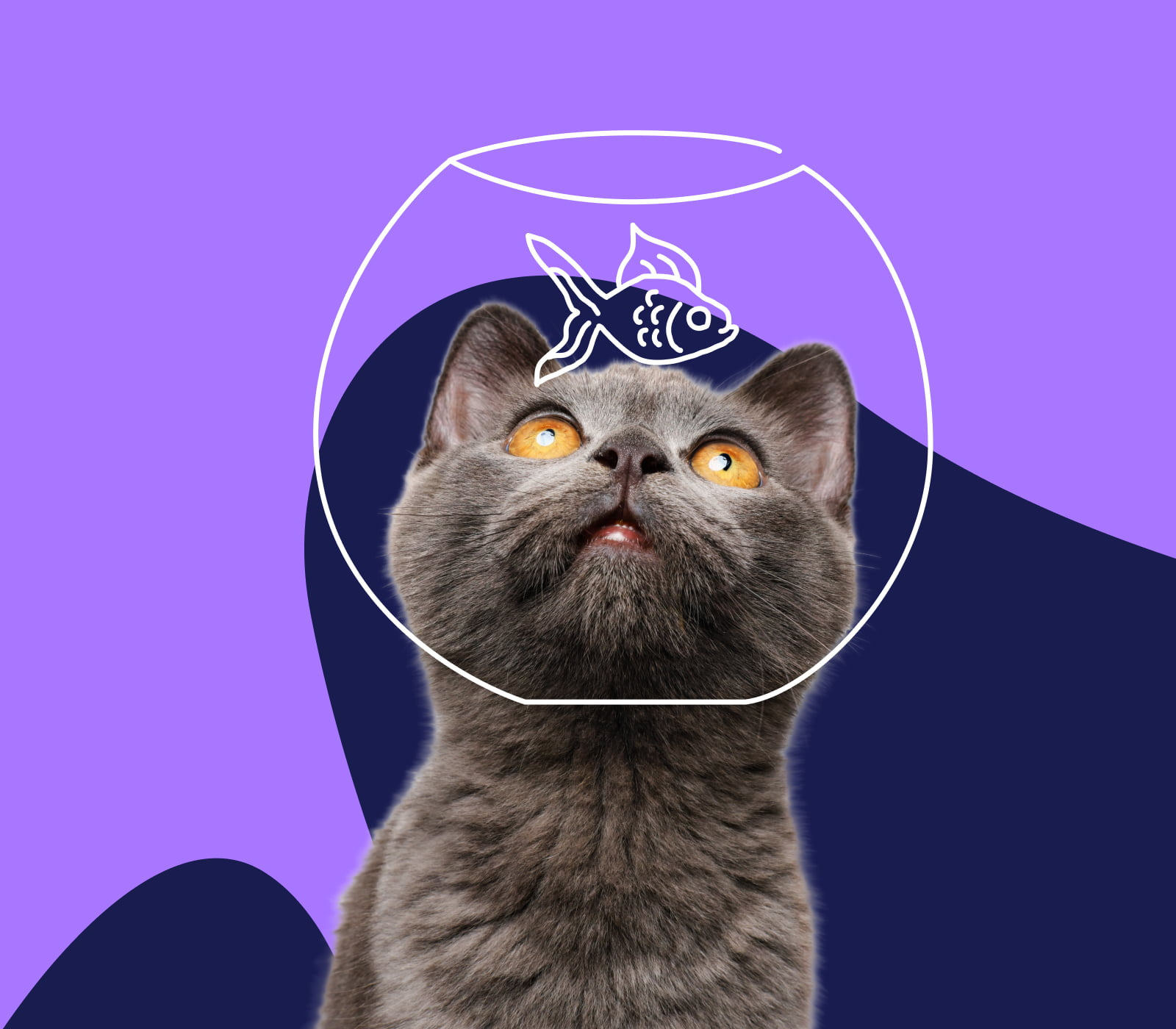 A cat with an upside down fish bowl stuck on their head
