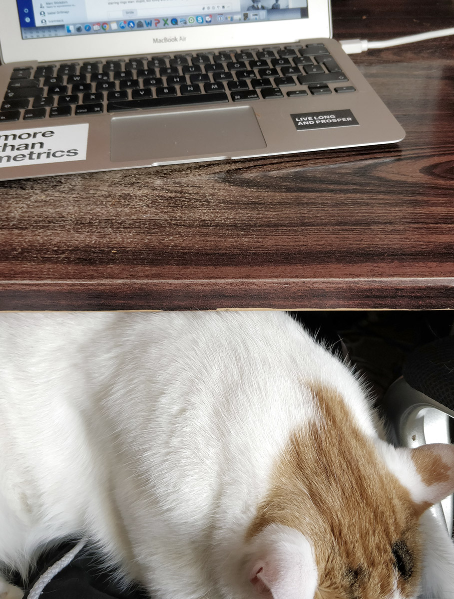 Photo of a cat underneath a home desk with a More than Metrics laptop on it