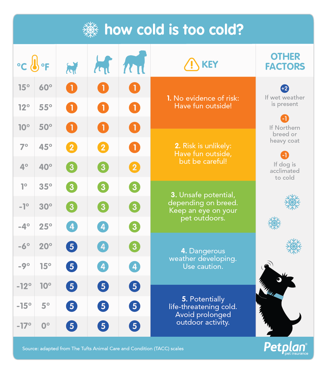 How cold is too cold for your dog? Use this infographic from Petplan pet insurance to find out!