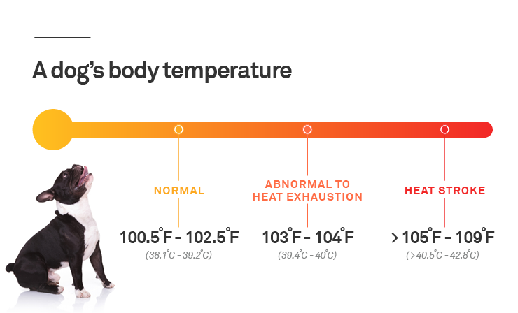 dog body temperature infographic