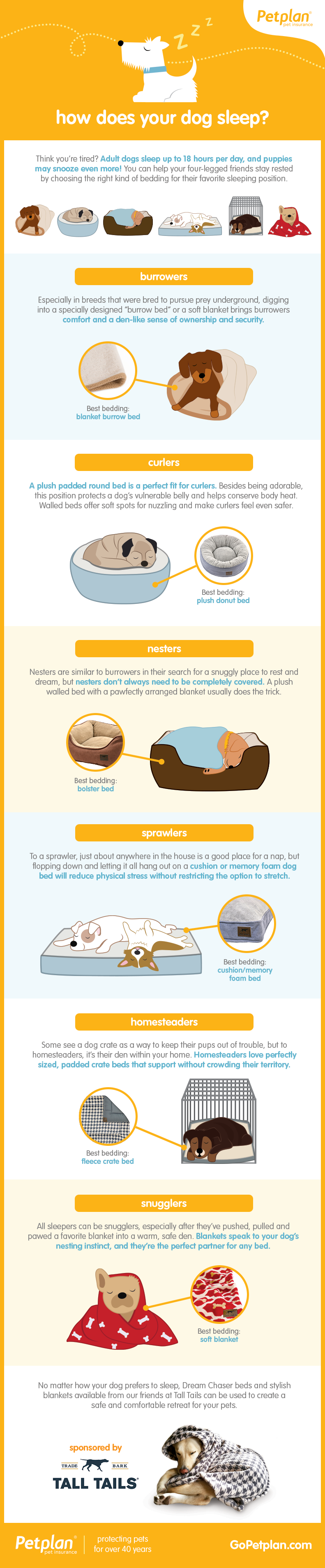 How to choose the bed dog bed infographic | Sponsored by Tall Tails
