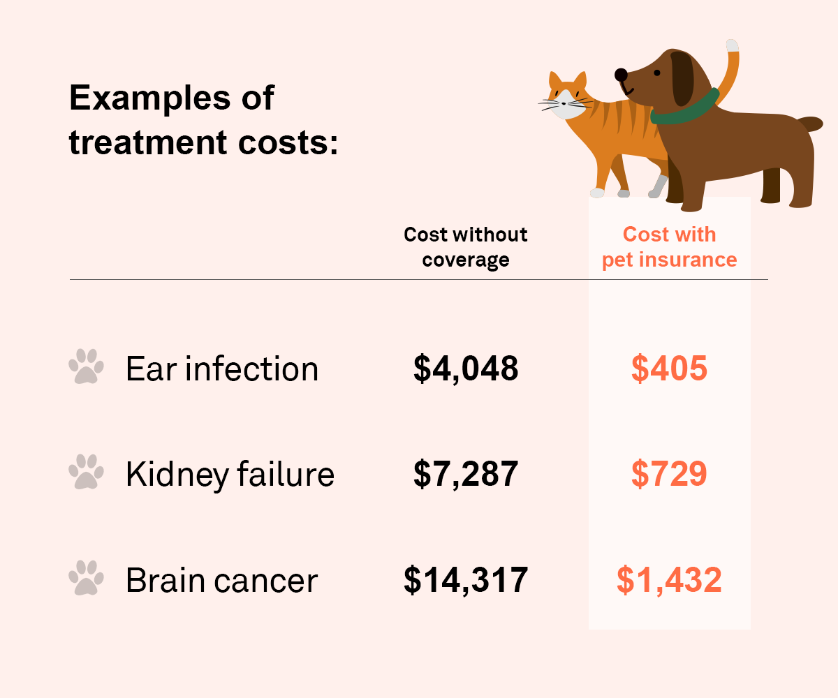 how much can pet insurance save you?