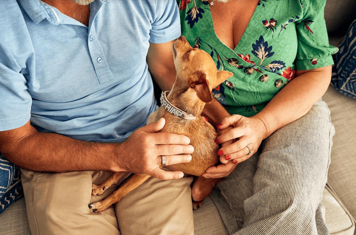 National Dog Day 2020: 15 Celebrity & Rainbow Bridge Dogs
