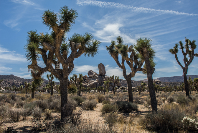 Tress and fauna in the desert, which act as natural carbon sinks.