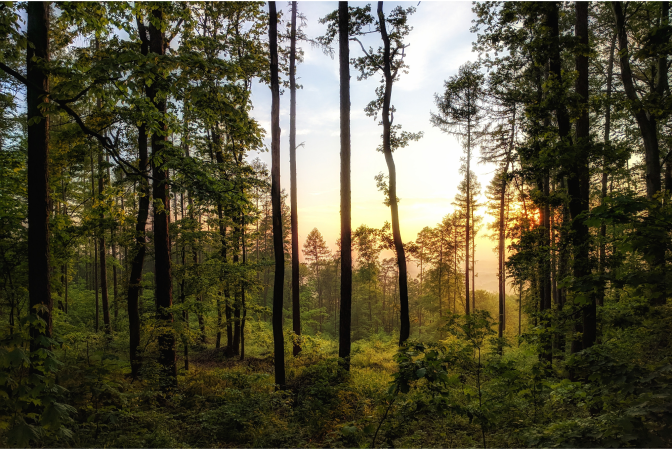 Majestic forest with trees at dusk
