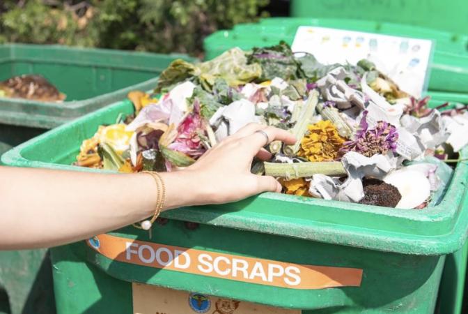 Organic waste collection bin