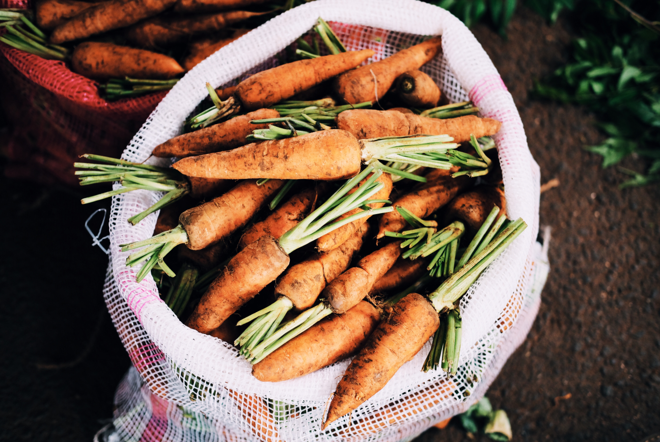 Bag of harvested carrots