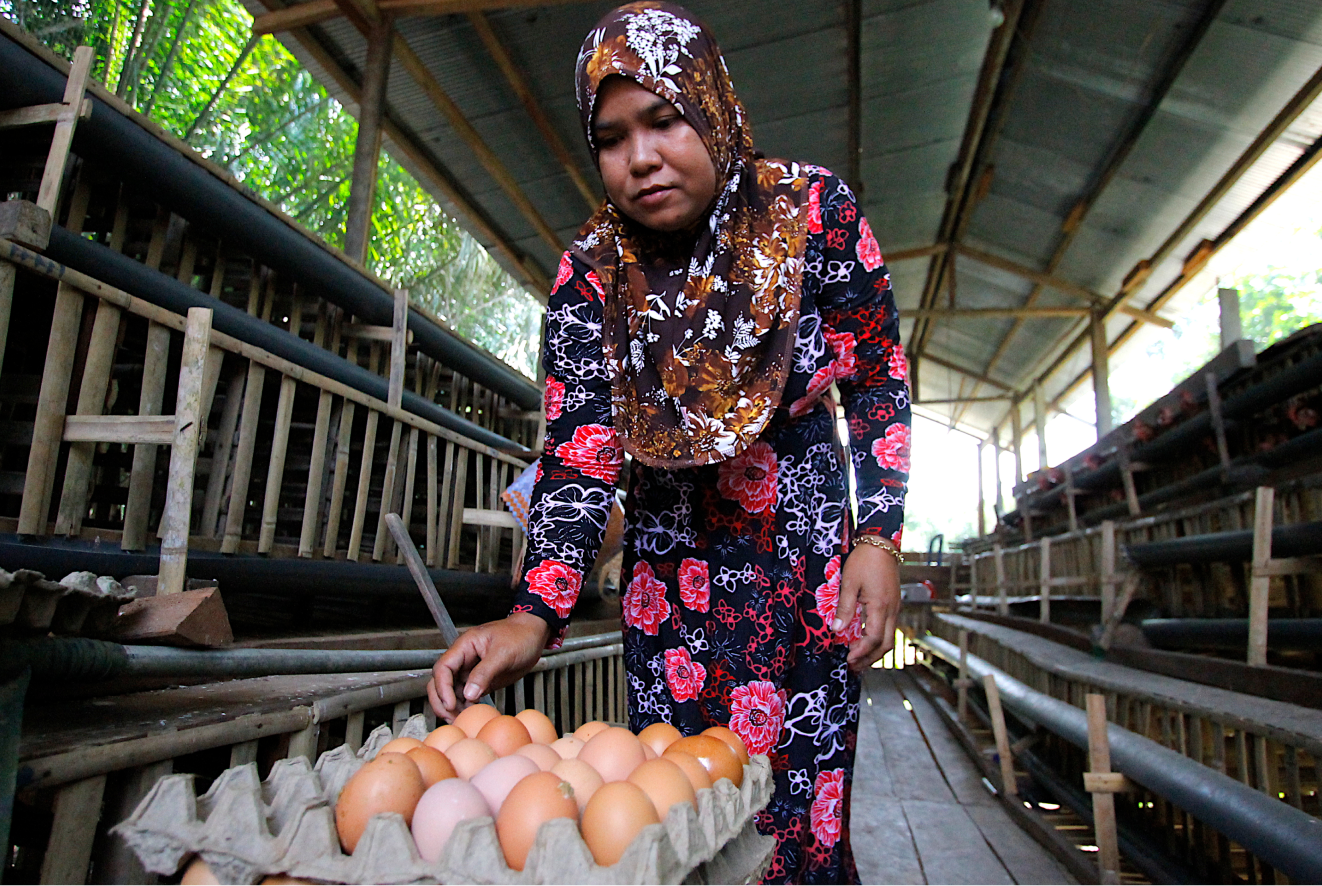 Woman placing eggs into trays