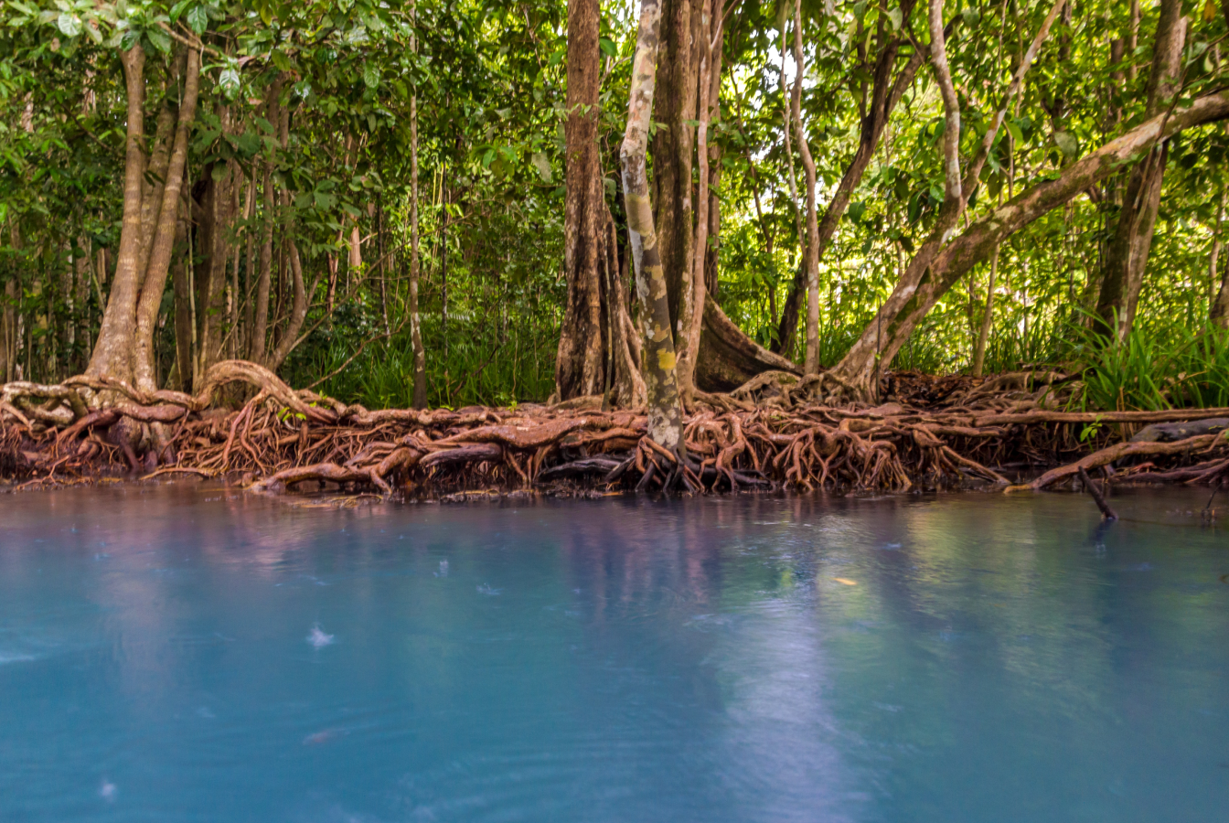 A mangrove acting as a natural carbon sink.