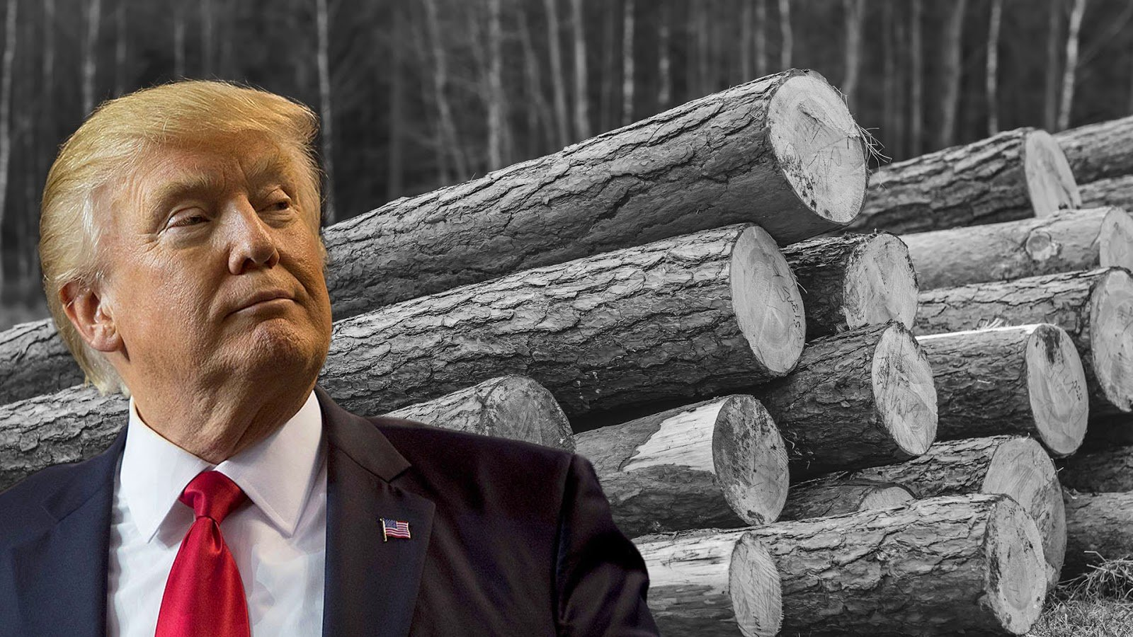 Trump-softwood