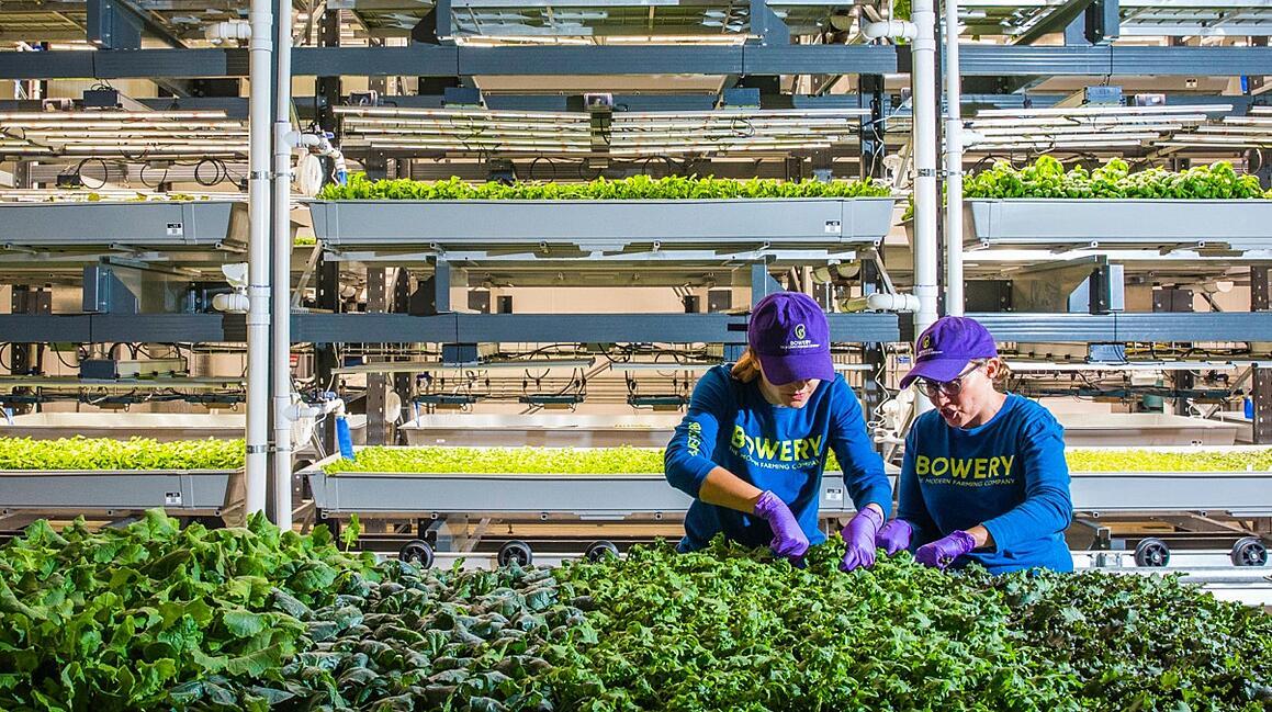 bowery-farming-bloomberg@2x