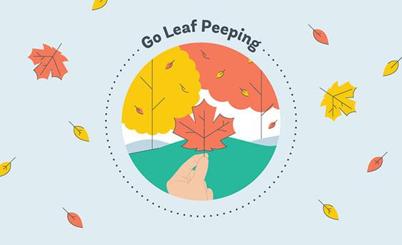 leaf peeping graphic