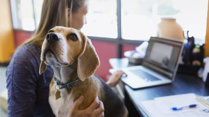 Office dog = Happy employees. Trust in leadership = Engaged employees | peopleHum