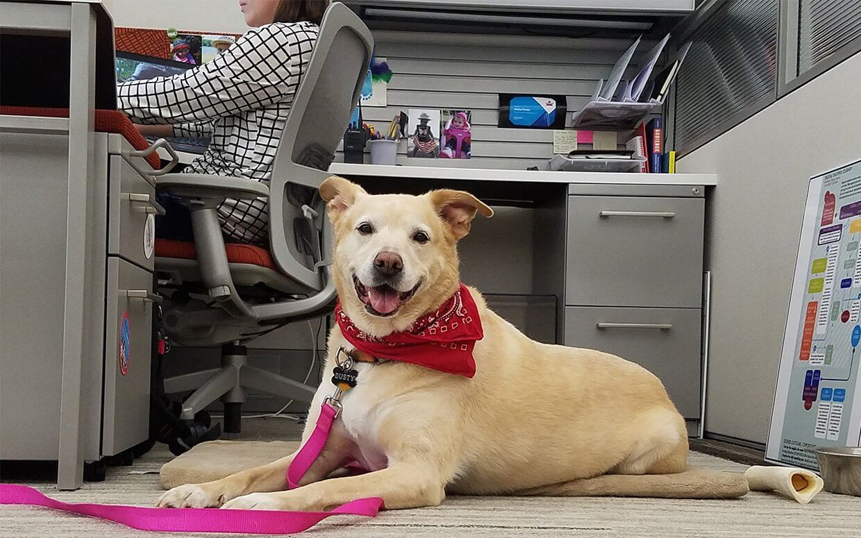 Office dogs don't drive employee engagement. A properly executed strategy does. | peopleHum