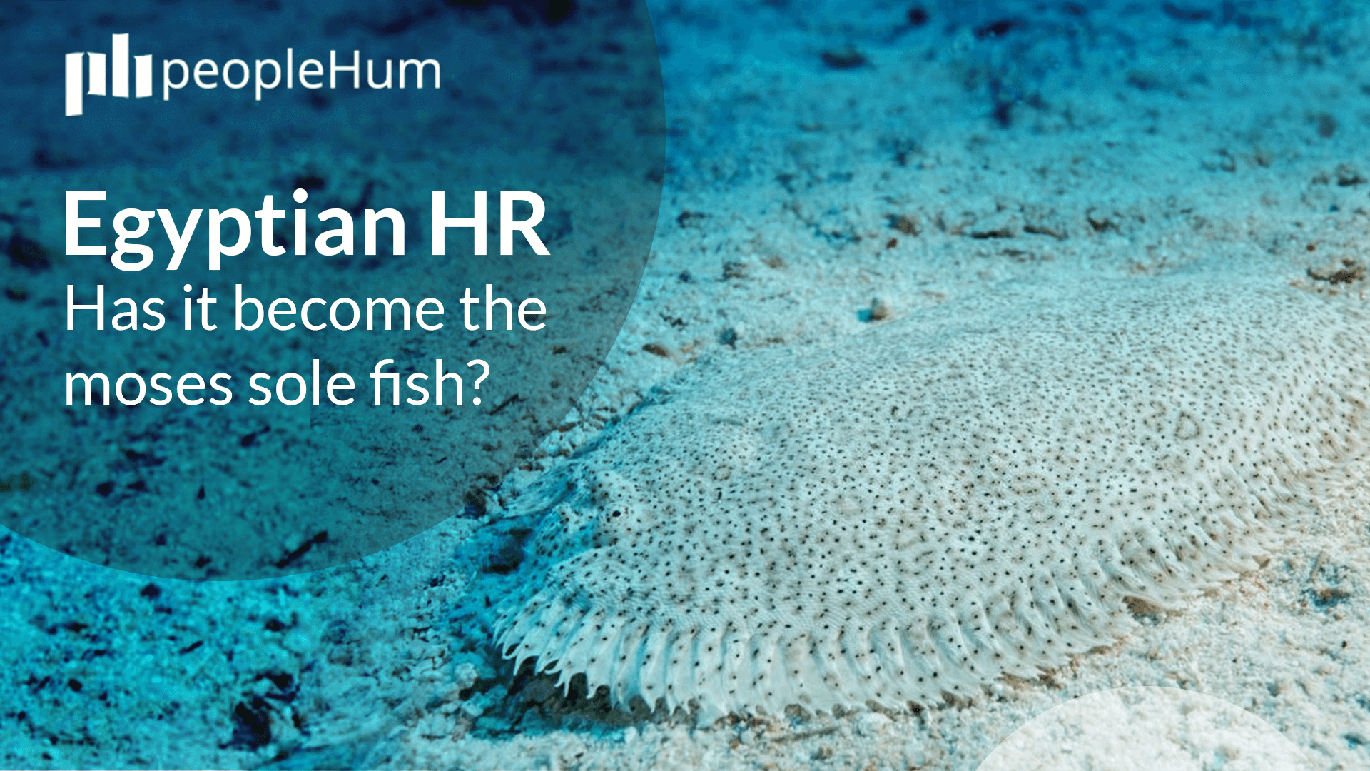Egyptian HR - Has it become the Moses sole fish?