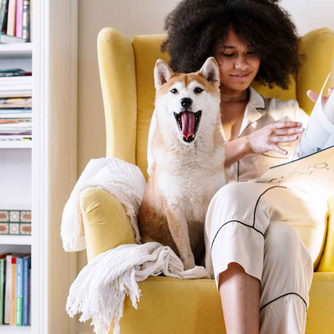 woman shares an arm chair with her Shiba Inu dog as she reads a magazine in her pajamas on a sunny morning