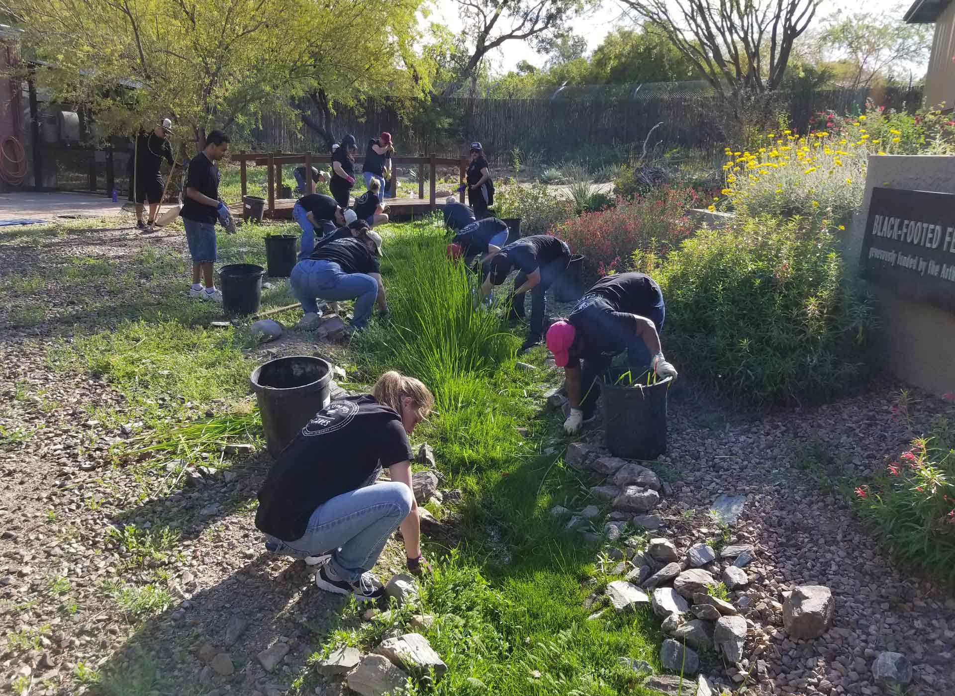 sixteen SunWest employees volunteer on a sunny day with SunWest Cares to help pull weeds and landscape at the Phoenix Zoo