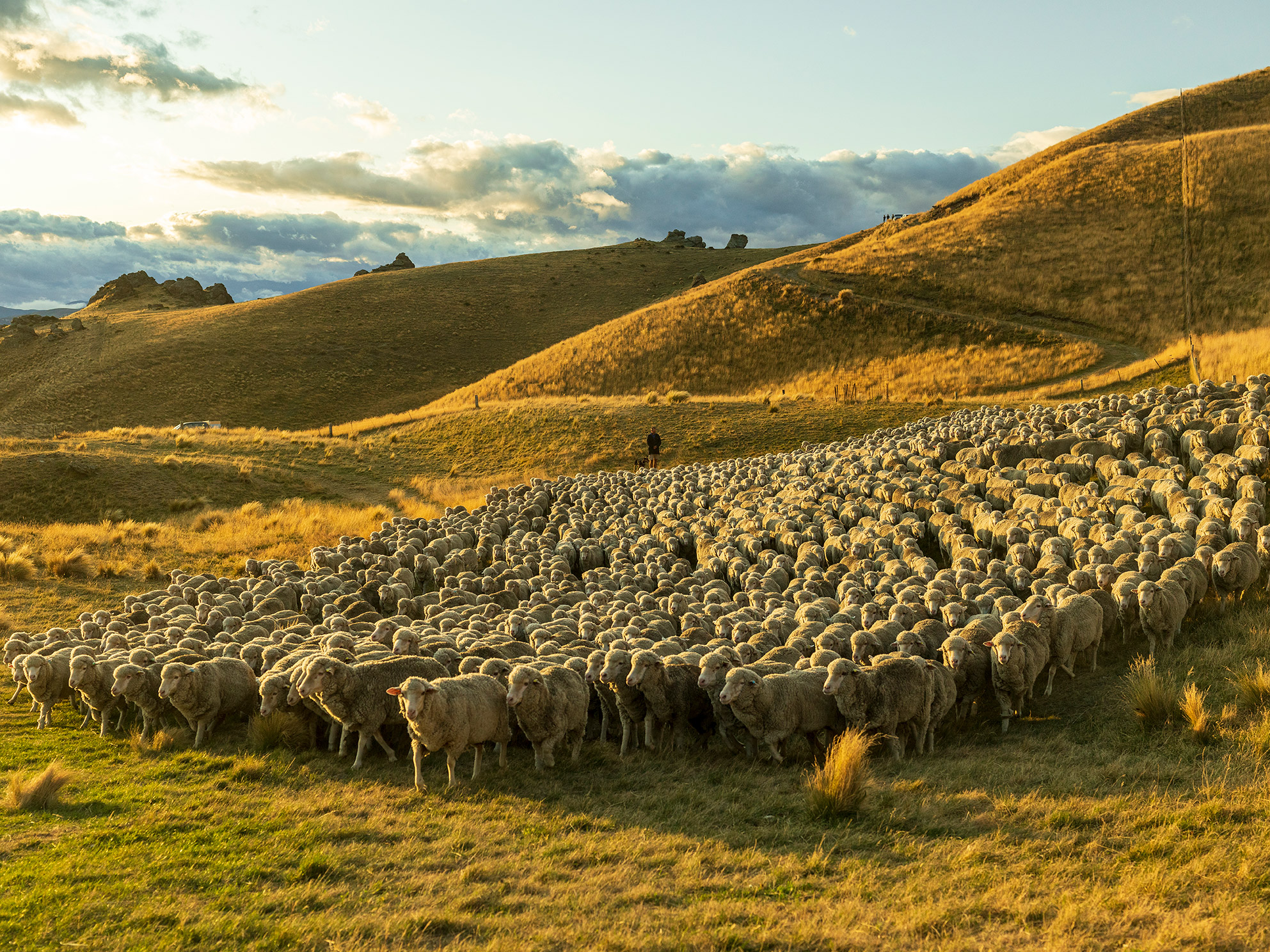 A photo of a herd of Sheep.