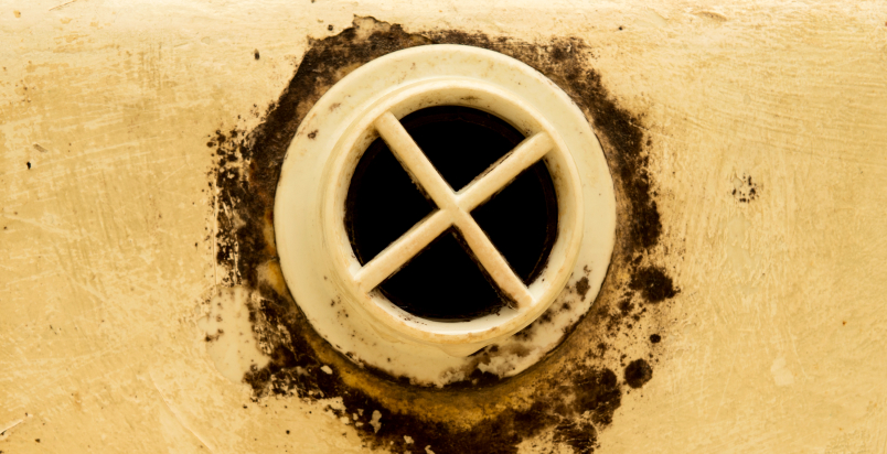 moldy drain