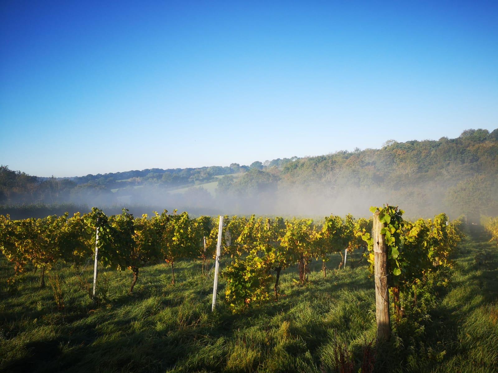 limney farm davenport vineyard