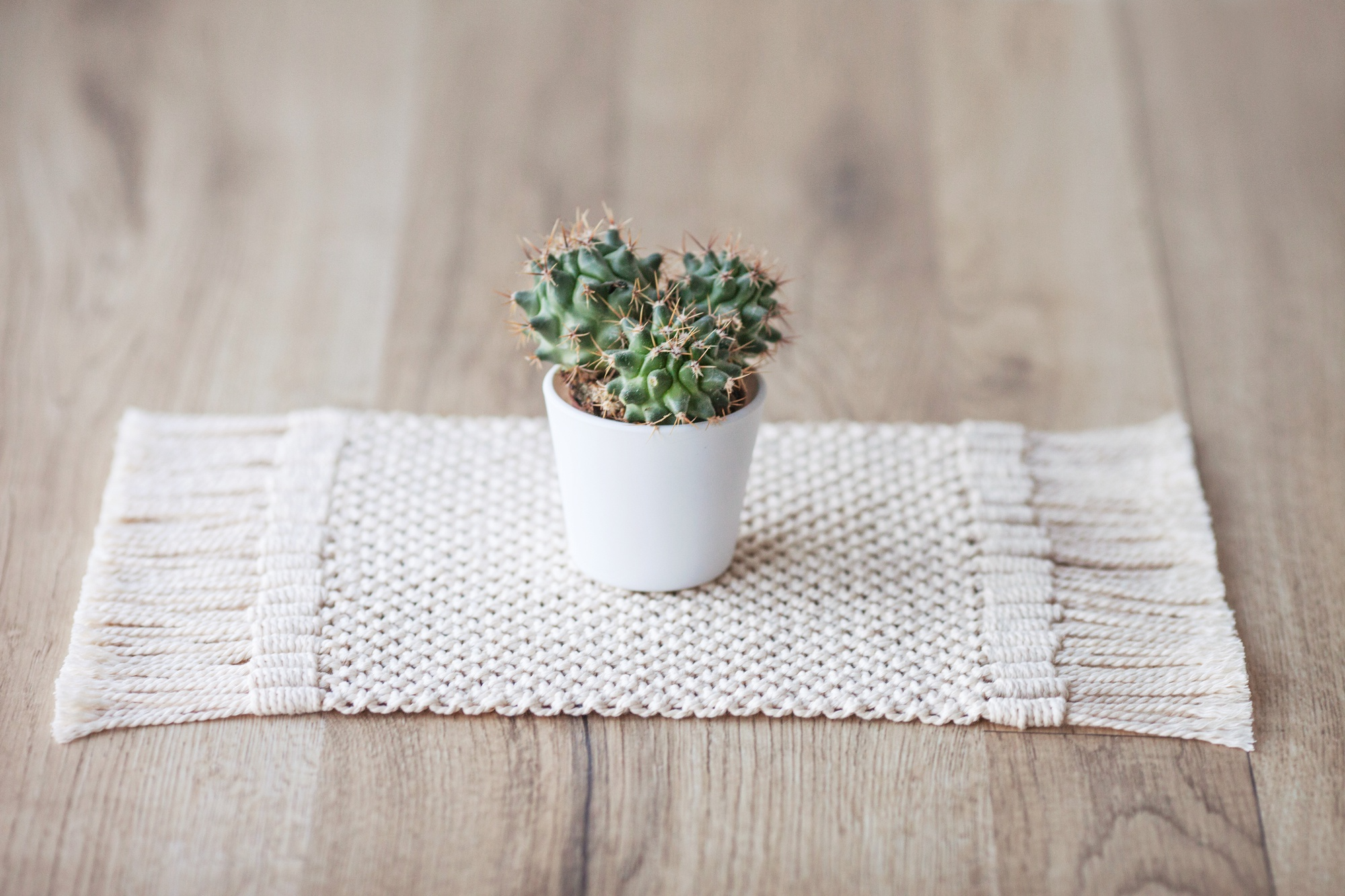 Small potted plant on yarn rug