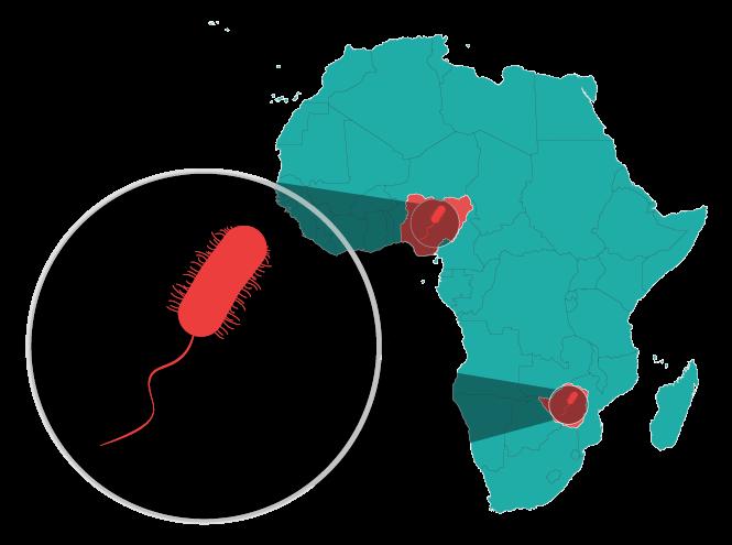 Cholera in Zimbabwe and Nigeria graphic