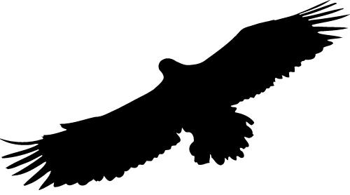 Lakes Coast Hidden Eagle