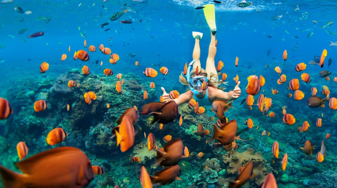 Snorkeling experience to 3 reefs