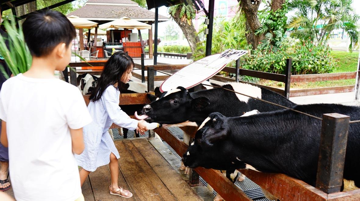 Chokchai Farm Agro Tour