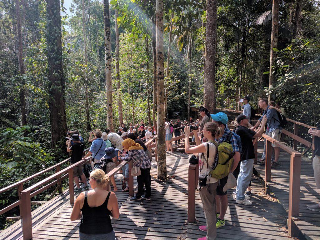 Semenggoh Wildlife Rehabilitation Center activity