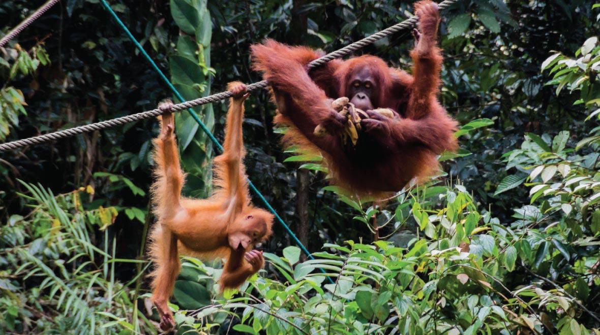 Semenggoh Wildlife Rehabilitation Center