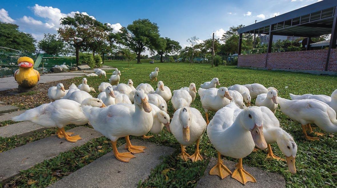Duck Stork Story Museum