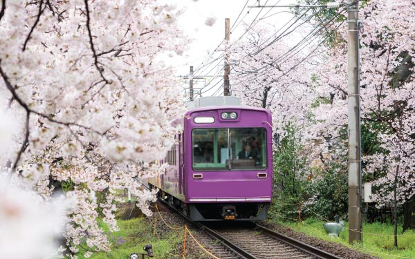 Hassle-free Osaka + Kyoto Apartment Rail Tour